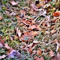 Samedi matin neigeux & glacé